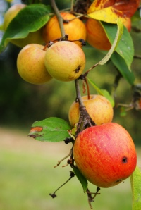 Fresh content on your website will bear the most fruit for your SEO campaign.